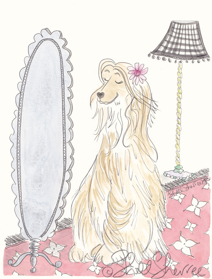 Ally the Afghan is Always Alluring illustration © Shell Sherree all rights reserved