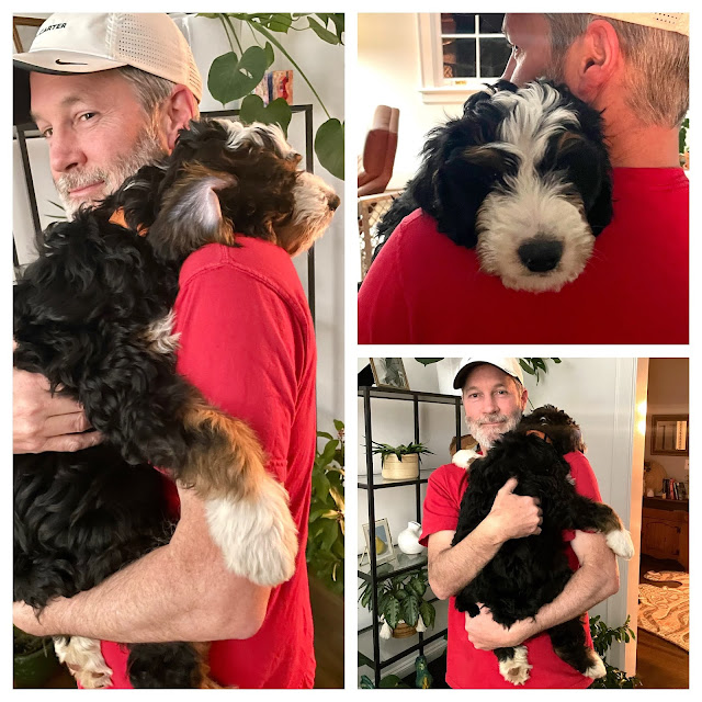 man holding a large puppy on his shoulder (3 picture collage)