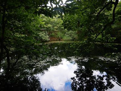 夏のオトワ池