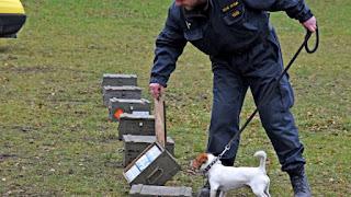 treinamento de cães de resgate