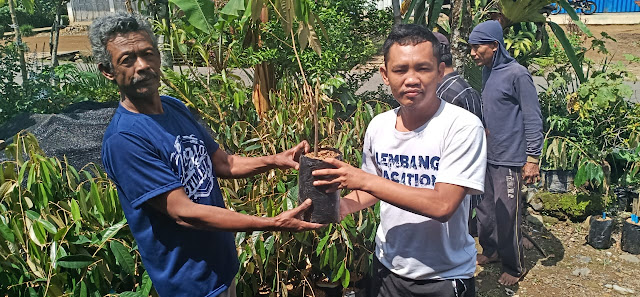Tingkatkan Kesejahteraan Warga, Pekon Purajaya Bagikan 800 Bibit Pohon Durian Montong
