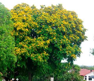 angsana-www.healthnote25.com