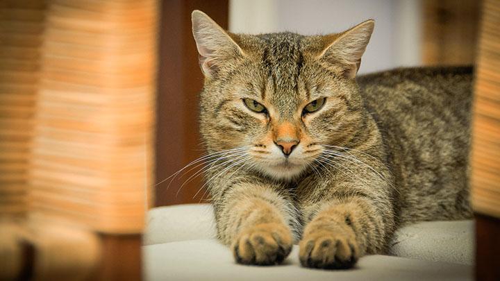best med for cat allergies