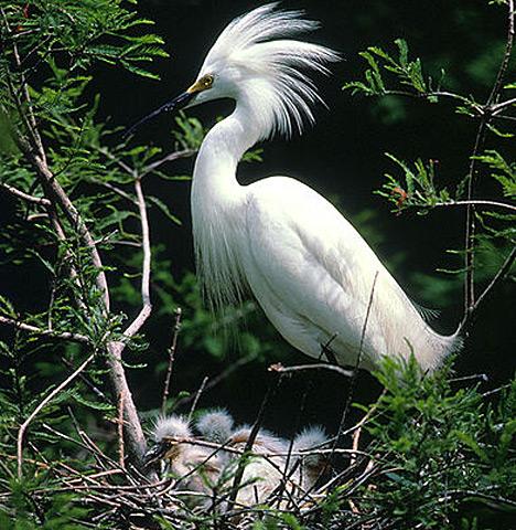 Birds: ALBINO BIRDS