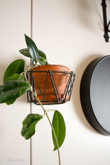 viherkasvi kasvi kukka koti posliinikukka trendikäs sisustaminen