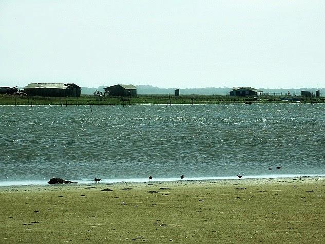 Casas de pescadores junto à Lagoa do Peixe