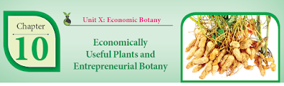 CLASS 12 BIOLOGY BOTANY - CHAPTER 10 ECONOMICALLY USEFUL PLANTS AND ENTREPRENEURIAL BOTANY - 1 MARK QUESTIONS - ONLINE TEST