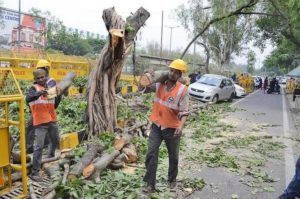 Tree-Felling banned by Bihar Government