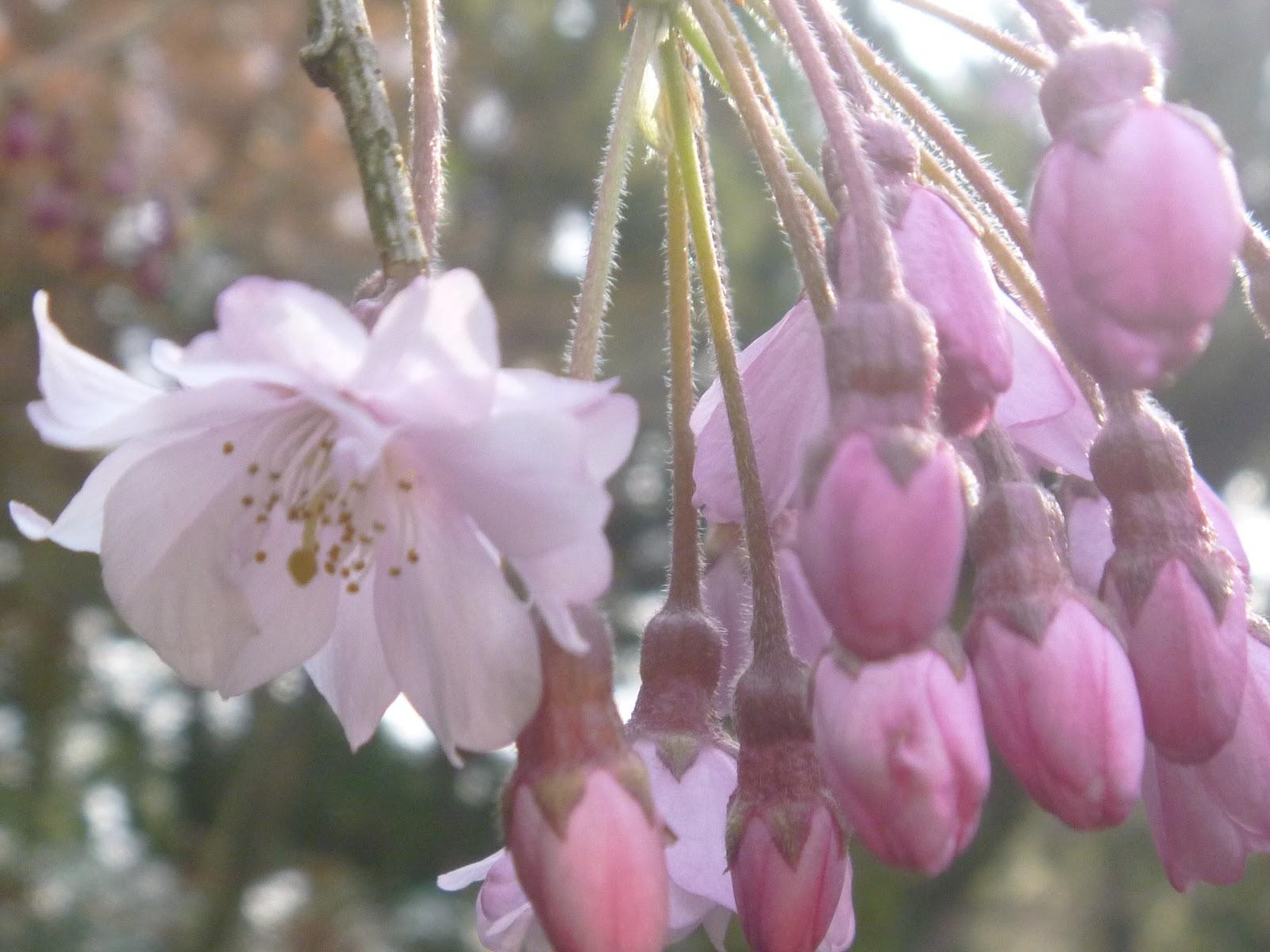 翡翠園、玉翠園・谷村美術館日記: 春たけなわ