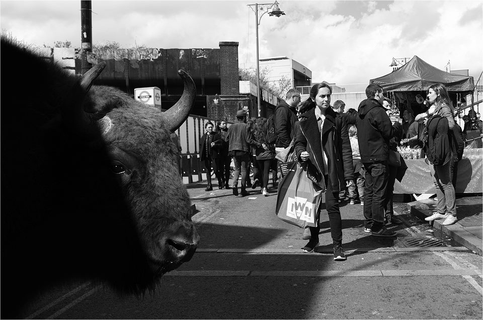 05-Buffalo-Ceslovas-Cesnakevicius-The-Zoo-on-our-Streets-Black-and-White-Photography-www-designstack-co