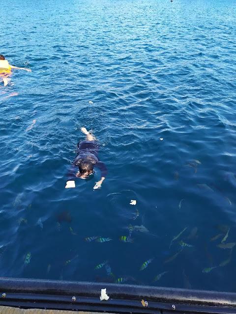 berenang di bangsring