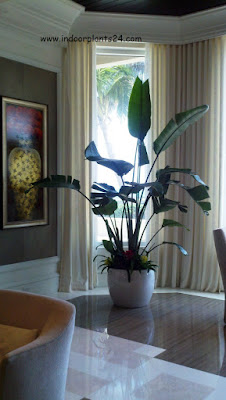 bird of paradise plant facts information