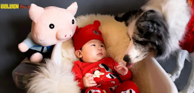 Pet and arrival of newborn baby