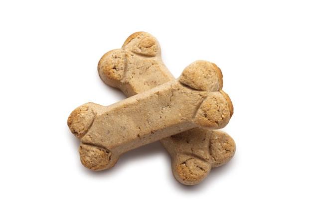 A Healthier Food Alternative For Your Maltese Dog