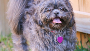 12 Small Dog Breeds Perfect for Families With Kids