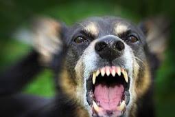 Arti Mimpi Digigit Anjing : Waspada Akan Pertanda Sesuatu!