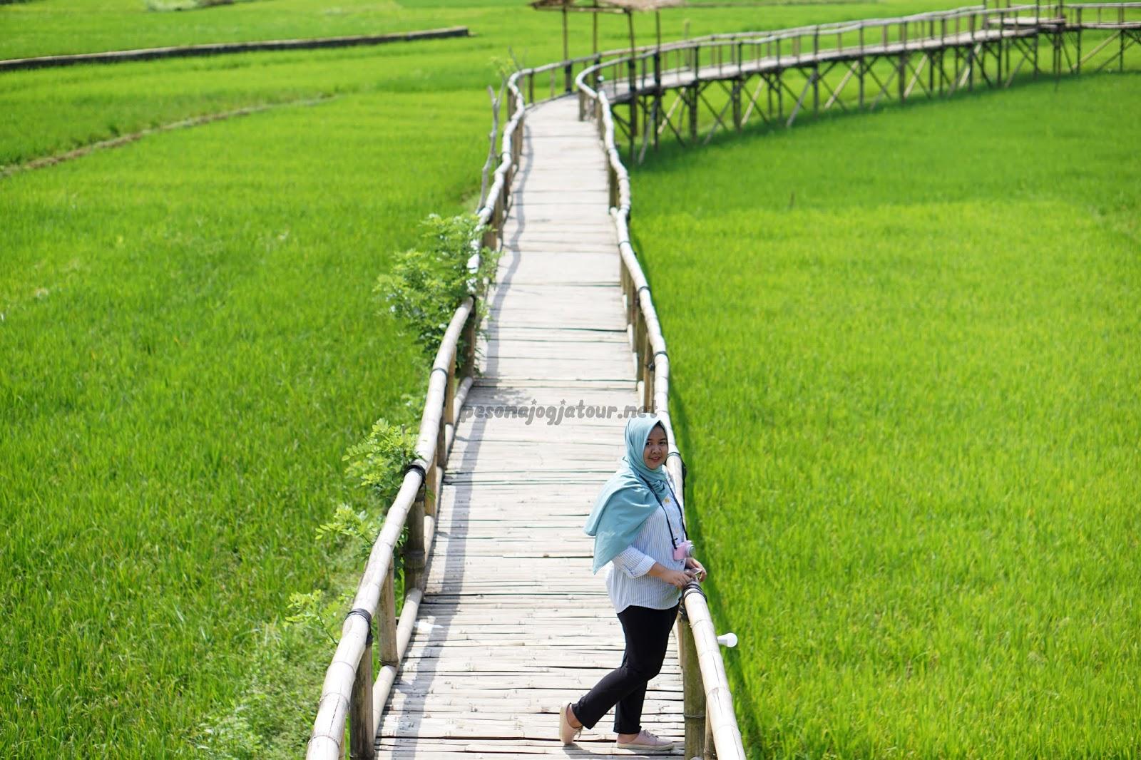 Sawah Bowongan Sukorame