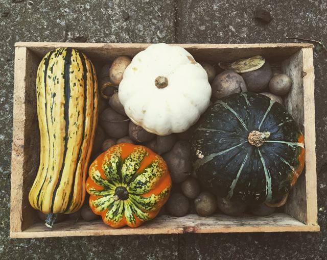 Autumn rustic squash