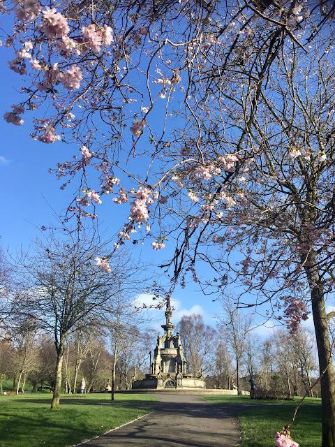 Cherry blossom in Kelvingrove Park, Glasgow, Scotland