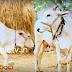 Mic TV సంక్రాంతి పాట
