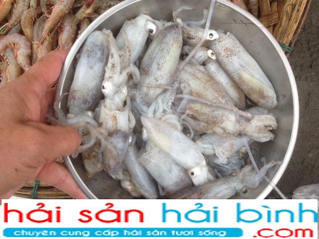 Cung cấp, bán mực tươi giá sỉ lẻ tại Hà Nội