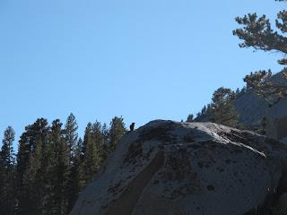 Ein Streifenhörnchen auf einem Felsblock