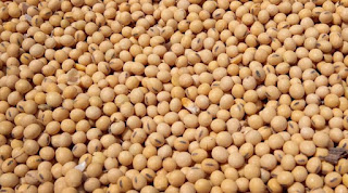 Soybean, sarson, Soya oil and CPO fundamental update