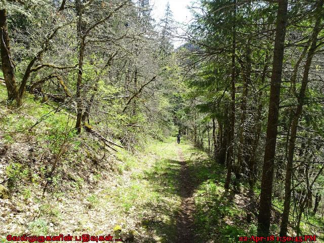 Trail #54 Buck Creek Gifford Pinchot National Forest