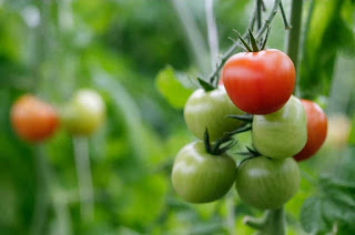 cheap food and nutrias tomatoes
