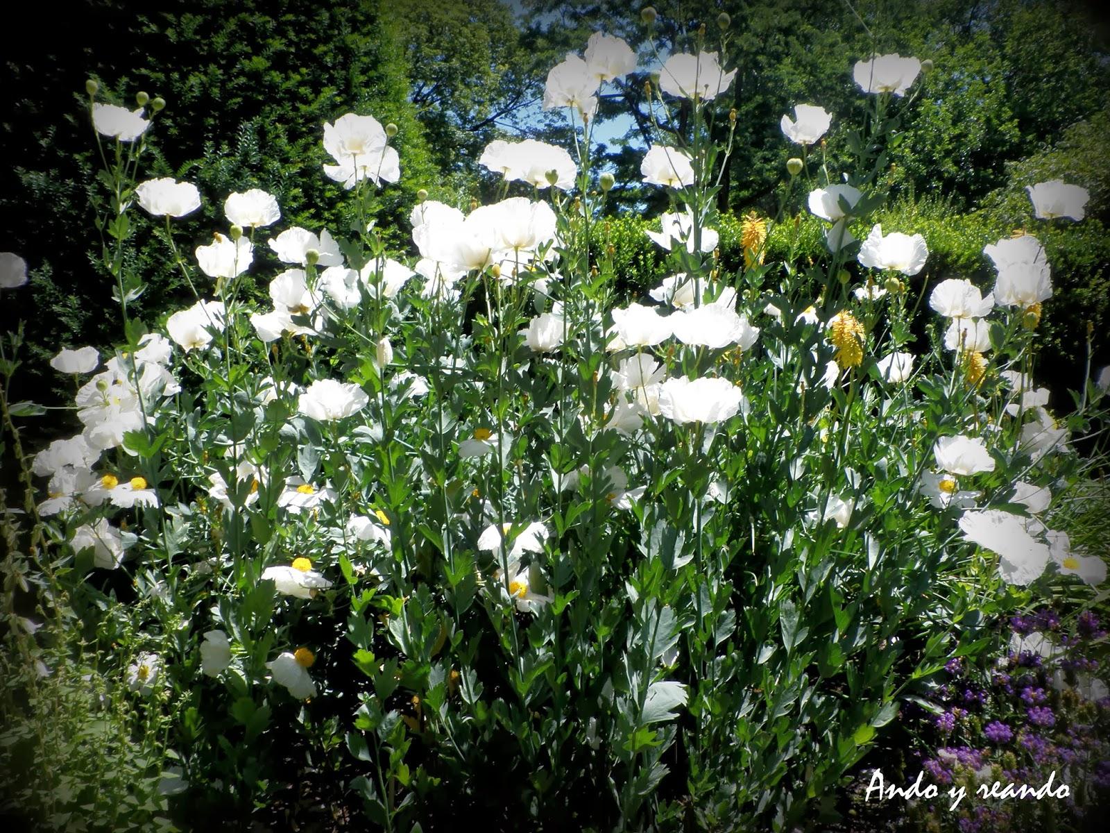 Flores blancas pequeñas