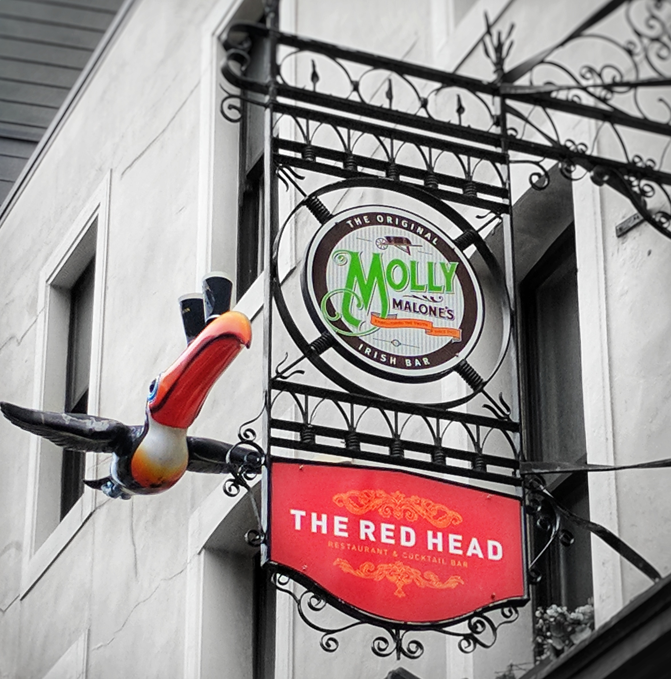 Toucan and Molly Malone's pub signs