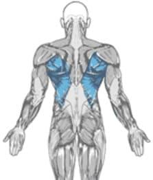 تشريح عَضلة الظَّهر. و رُجوعاً لِعَضلات الظَّهر و التي هي مَوضوع دَرسِنا لِهذا اليَوم, فَهي تَنقسم ...