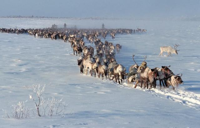 Những chuyến di cư vĩ đại nhất thế giới động vật