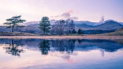Wallpaper free trees, lake, reflection, landscape