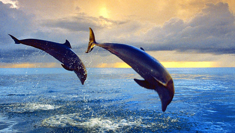COOL WALLPAPERS: bottlenose dolphins jumping
