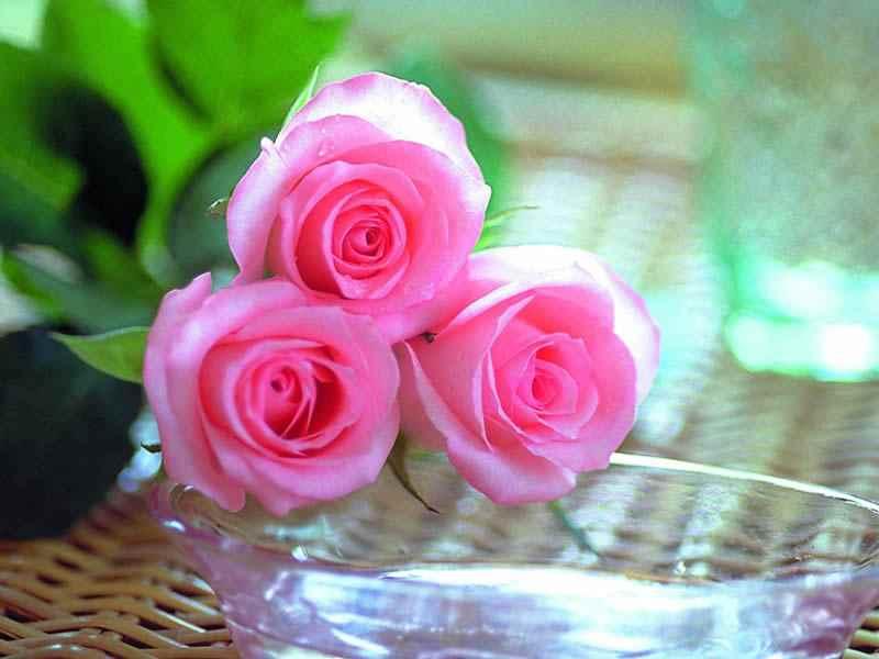 احلى صور ورود و صور زهور 2019 Best Photo Rose Flower عالم
