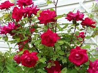 7 Manfaat Dari Bunga Mawar Untuk Kulit Yang Sangat Bermanfaat