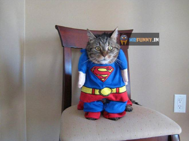 Funny Cosplaying Pets