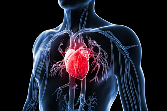 6 LIFE AND LONG LASTING WAYS TO IMPROVE THE HEART HEALTH