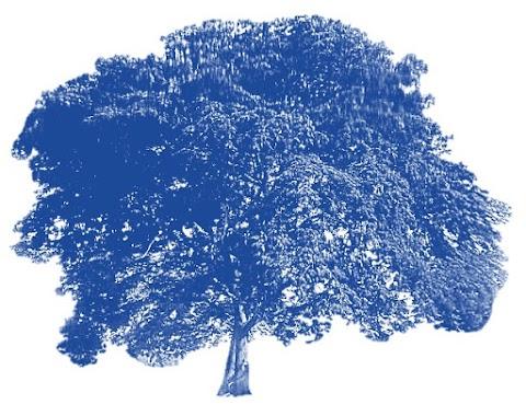 CONVOCATORIA Antología virtual Los árboles arrancan su cuerpo de la sombra