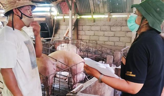 Kementan Awasi Pemotongan Babi Untuk Galungan dan Kuningan