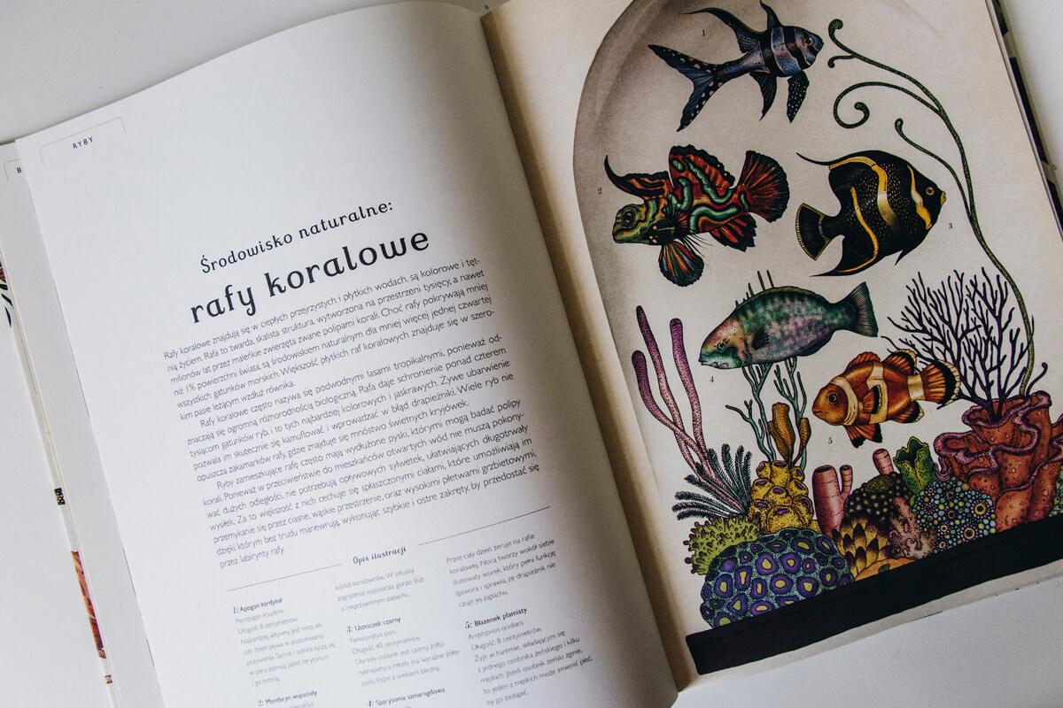 Animalium książka