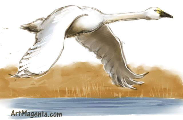 Tundra Swan sketch painting. Bird art drawing by illustrator Artmagenta.