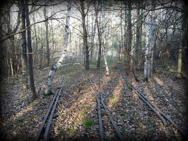 Railroad Tracks, Diverging, woods, road, path, street