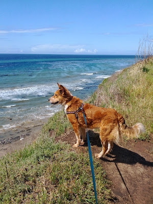 Dog on scenic bluffs overlooking the ocean