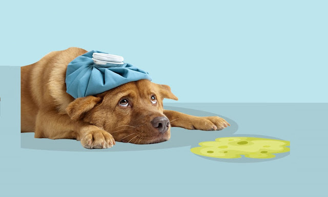Why Is My Dog Throwing Up Undigested Food Hours After Eating?