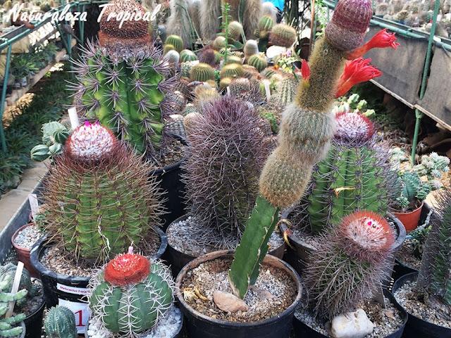 Adelfa enana reproduccion asexual de las plantas