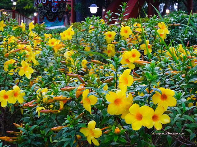 Flowers at Eco Tourism Park, Kolkata