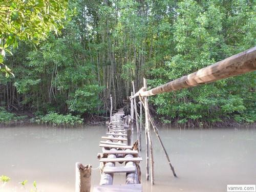 Cây cầu khỉ đến Vọng Lâm Đài