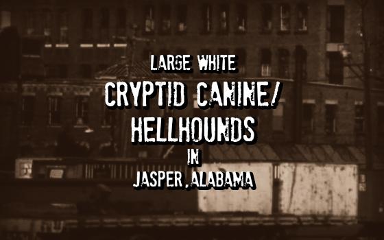 Large White Cryptid Canine / Hellhounds in Jasper, Alabama